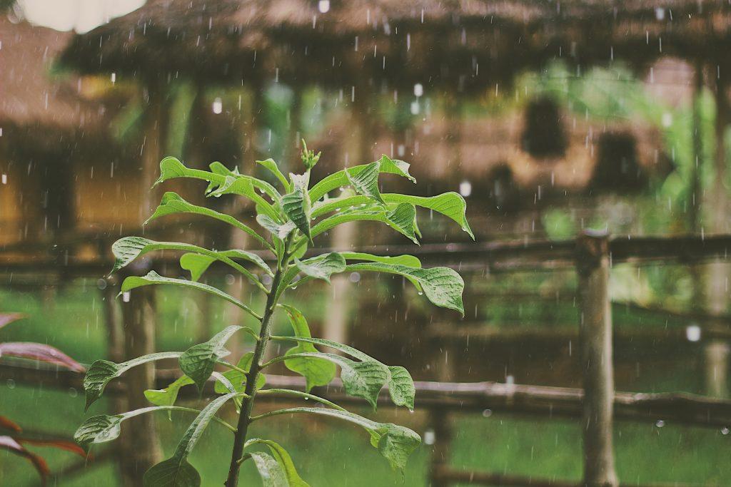 Qué es la resiliencia y cómo usarla para afrontar la adversidad
